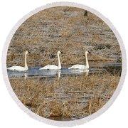 Three Trumpetor Swans 0629 Round Beach Towel