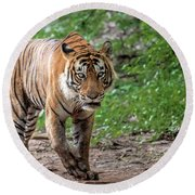 Tiger On A Stroll Round Beach Towel