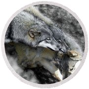 Timber Wolves Up Close Round Beach Towel