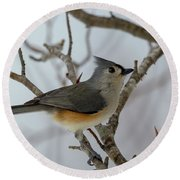 Titmouse Winter Morning Cutie  Round Beach Towel