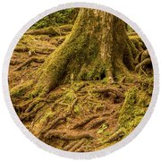 Trail Of Roots Round Beach Towel
