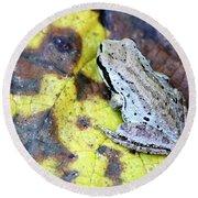 Tree Frog On Yellow Leaf Round Beach Towel
