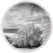 Trees In Florida Round Beach Towel