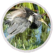Tricolored Heron With Ruffled Feathers Round Beach Towel