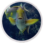 Tropical Fish Poses. Round Beach Towel