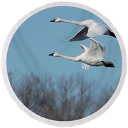 Tundra Swan Duo Round Beach Towel by Donald Brown