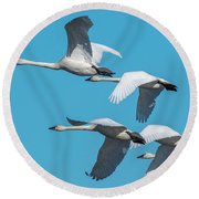 Tundra Swans In Flight Round Beach Towel by Donald Brown