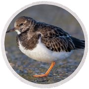 Turnstone Round Beach Towel