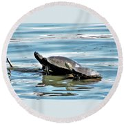 Turtles - Mother And Child Round Beach Towel