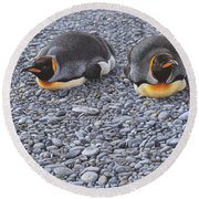 Two King Penguins By Alan M Hunt Round Beach Towel