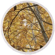 Two Owls In Autumn Tree Round Beach Towel