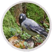 Under The Oak Tree. Hooded Crow Round Beach Towel
