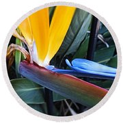 Vibrant Bird Of Paradise #2 Round Beach Towel