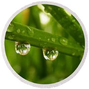Water Drops On Wheat Leafs Round Beach Towel