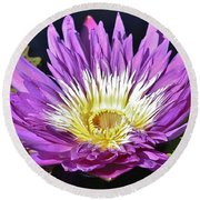 Water Lily On The Pond Round Beach Towel