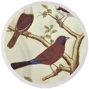 White Headed Munia, Double Coloured Seed Eater And Violet Eared Waxbill Round Beach Towel