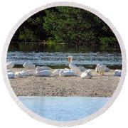 White Pelican Rest Round Beach Towel