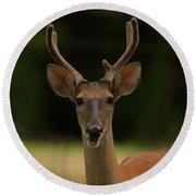 White-tailed Deer - 8282-2 Round Beach Towel