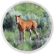 Wild Horse Foal Round Beach Towel