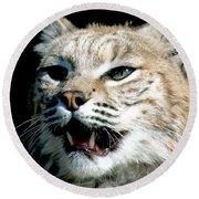 Wildcats Mascot 2 Round Beach Towel