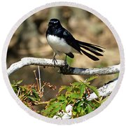Willy Wagtail #1 Round Beach Towel