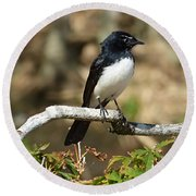 Willy Wagtail #2 Round Beach Towel