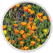 Yellow Poppies Of California Round Beach Towel