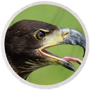 Young Bald Eagle 2 Round Beach Towel