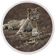 Young Bobcat By Alan M Hunt Round Beach Towel by Alan M Hunt
