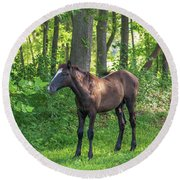 Young Brown Colt Round Beach Towel