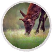 Young Elk Grazing Round Beach Towel