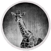 Young Giraffe Black And White Round Beach Towel