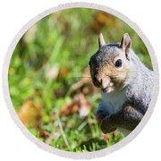 Your Friendly Neighborhood Squirrel Round Beach Towel