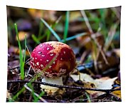 Amanita Muscaria Commonly Known As The Fly Agaric Or Fly Amanita Tapestry