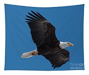 Bald Eagle In Flight 6 Tapestry