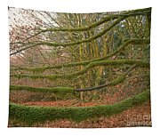 Moss-covered Big Leaf Maple Branches Tapestry