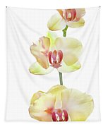 Backlit Orchids Against White Background Tapestry