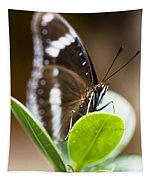 Beautiful Butterfly Tapestry