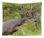 Beautiful Mule Deer Buck With Velvet Antler  Tapestry