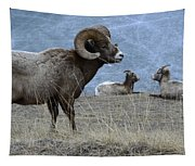 Big Horn Sheep 2 Tapestry