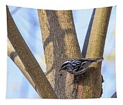 Black And White Warbler Tapestry