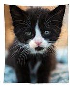Black And White Kitten Tapestry