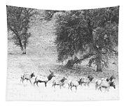 Bull Elk With Harem Tapestry