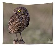 Burrowing Owl Photo Tapestry