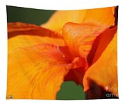 Canna Lily Named Wyoming Tapestry