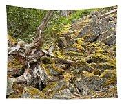 Cheakamus Rainforest Debris Tapestry