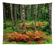Cinnamon Ferns And Red Spruce Trees Tapestry