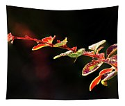 Close Up Of Berberis  Quebec, Canada Tapestry