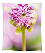 Closed Pink Baby Dahlia Flower. Spring Blossom Tapestry