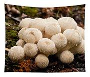 Common Puffball Mushrooms Lycoperdon Perlatum Tapestry